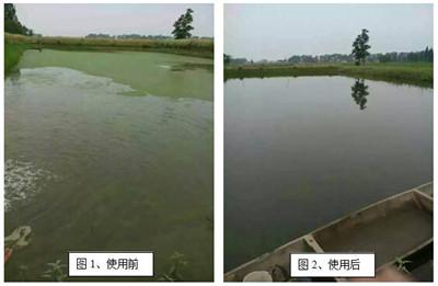 养殖水体水华分析及调节方法